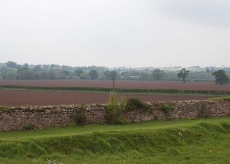 Potato fields at Huntsham